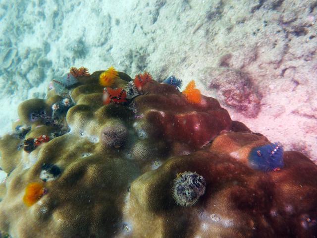 diving in thailand im wasser