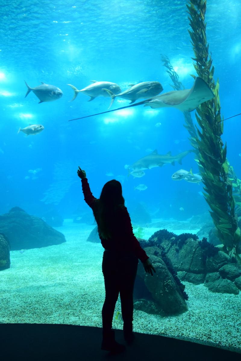 oceanarium lissabon